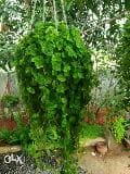 Ranjith kabir