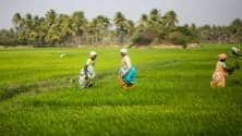 Agriculture clocks a growth of 3.9 percent as GDP sees marginal rise