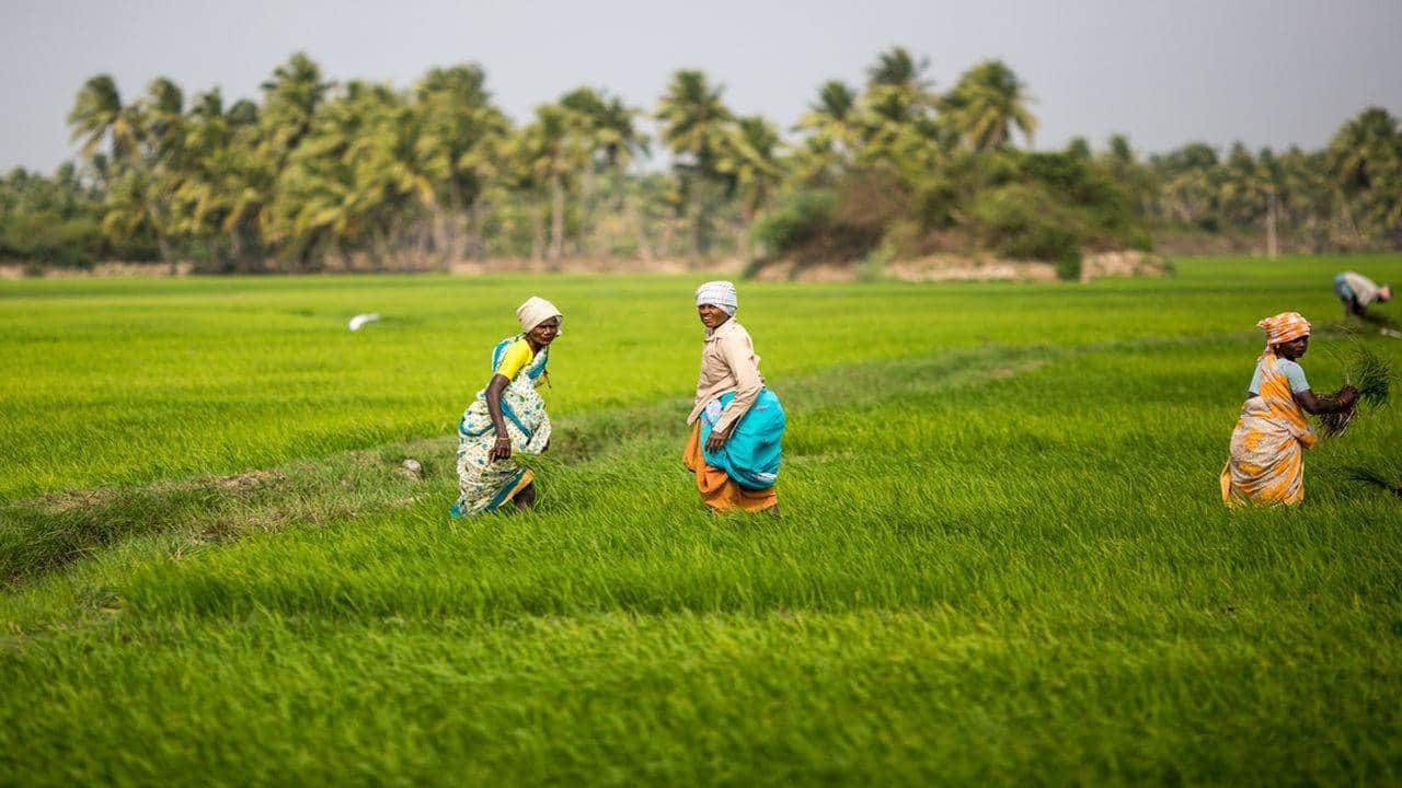 This agrochemical stock is up 115% since March; analysts still see double-digit gains