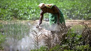 Budget 2021 expectations | Focus on agriculture to continue, Budget to be pivotal for fertiliser industry: ICRA