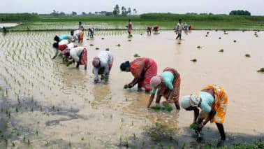 Budget 2019 | Expect a higher outlay for agriculture, rural sectors