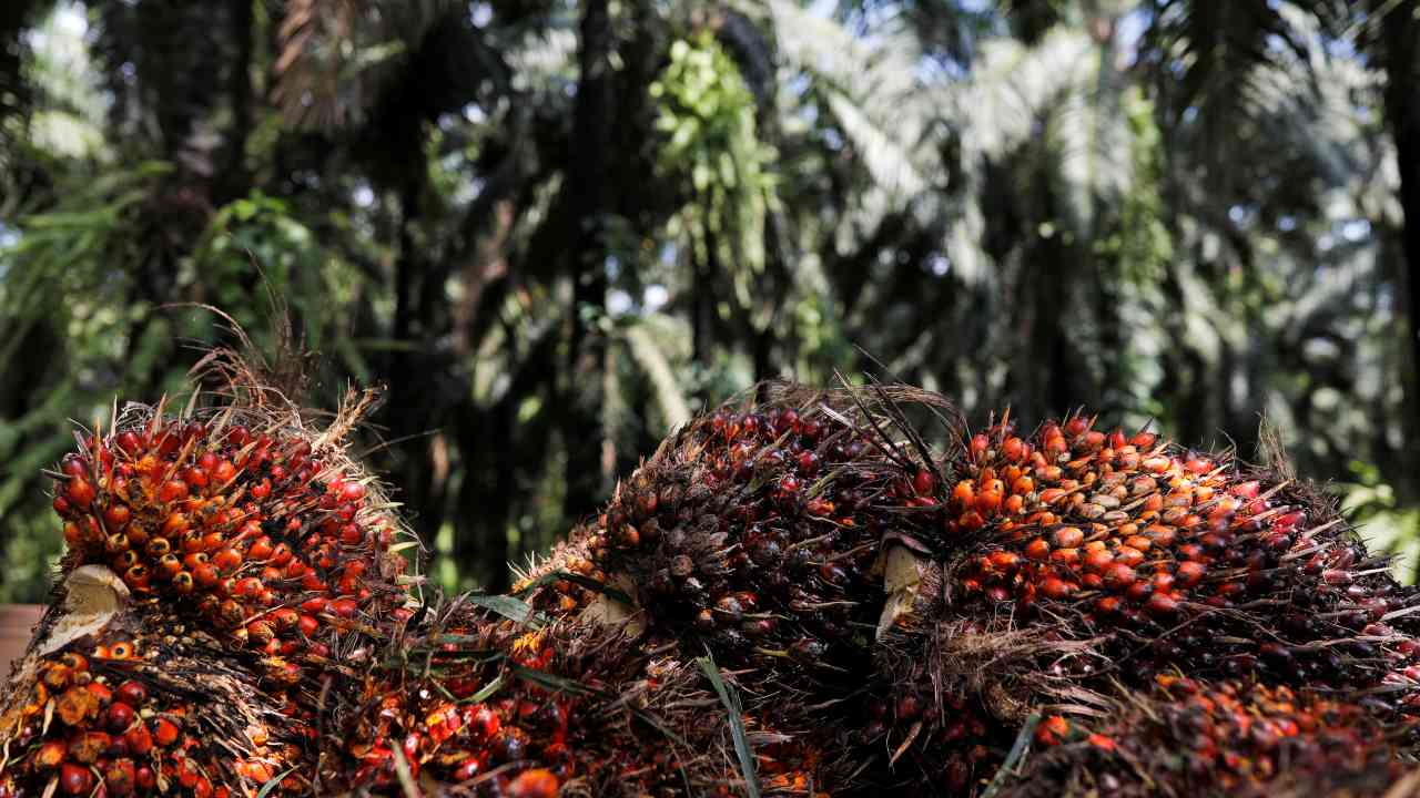 Crude palm oil futures decline 1.29% to Rs 1,158.80 per 10 kg on tepid demand