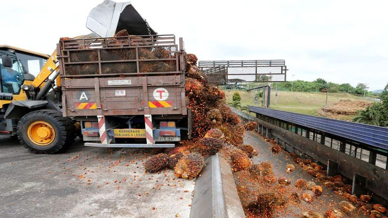 Crude Palm Oil slips 3% this week on MCX driven by weak demand; downward momentum likely to continue