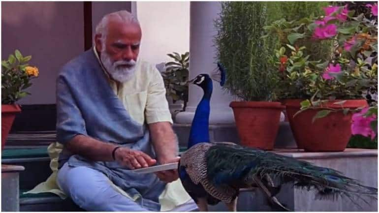 McKinsey Global Institute: Making the peacock dance
