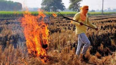 Stubble burning rose by more than 20% this year: Air quality commission official