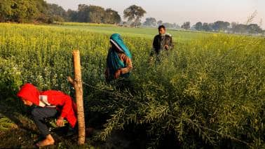 How to make the most of farm laws? Answer lies in farmer producer organisations