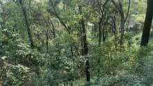 We want to industrialise the process of afforestation: Shubhendu Sharma of Afforestt